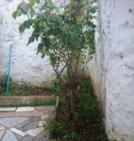 alquiler-piso-peñafiel-ca17-08